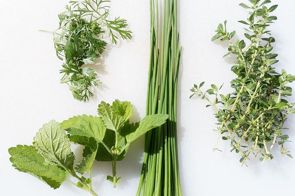 grilovací bylinky
